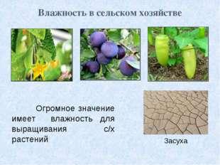Влажность в сельском хозяйстве Огромное значение имеет влажность для выращива