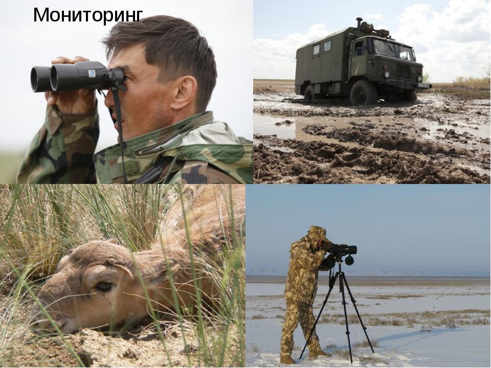 Природоохранная инициатива «Алтын Дала» Мониторинг  Природоохранная ини...