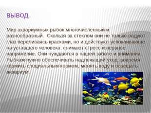 вывод Мир аквариумных рыбок многочисленный и разнообразный. Скользя за стекло