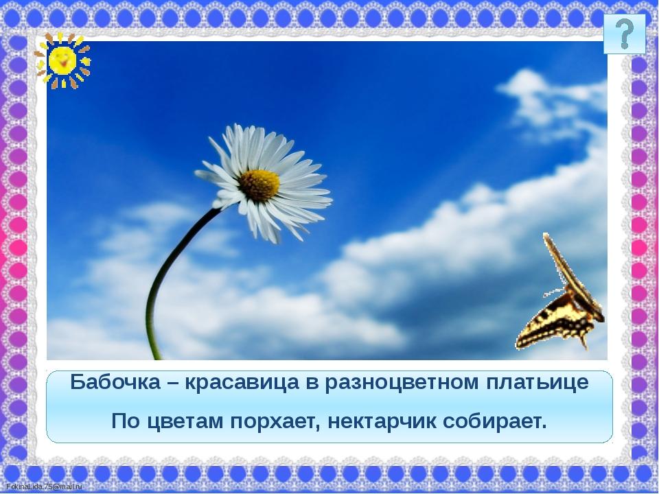 Бабочка – красавица в разноцветном платьице По цветам порхает, нектарчик соби...