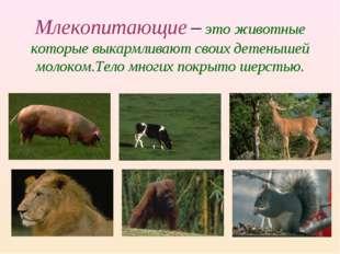 Млекопитающие – это животные которые выкармливают своих детенышей молоком.Тел