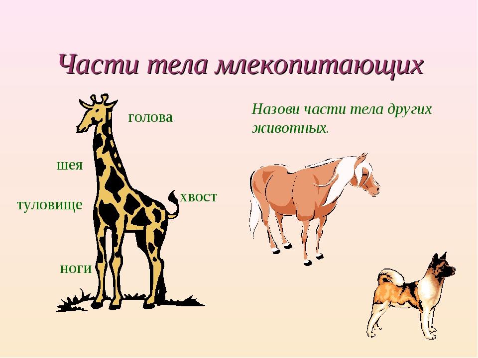 Части тела млекопитающих голова шея туловище хвост ноги Назови части тела дру...