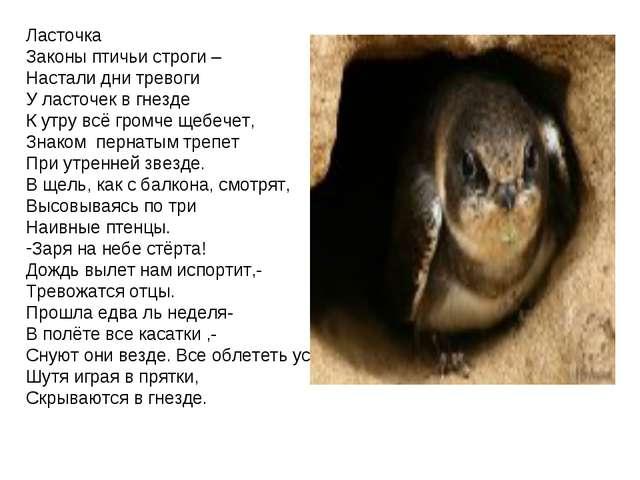 Ласточка Законы птичьи строги – Настали дни тревоги У ласточек в гнезде К утр...