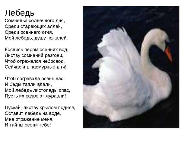 Лебедь Сомненье солнечного дня, Среди стареющих аллей, Среди осеннего огня, М...