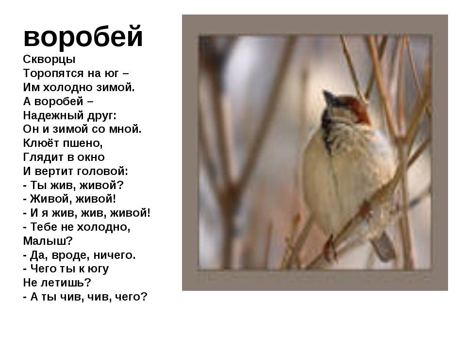 воробей Скворцы Торопятся на юг – Им холодно зимой. А воробей – Надежный друг...