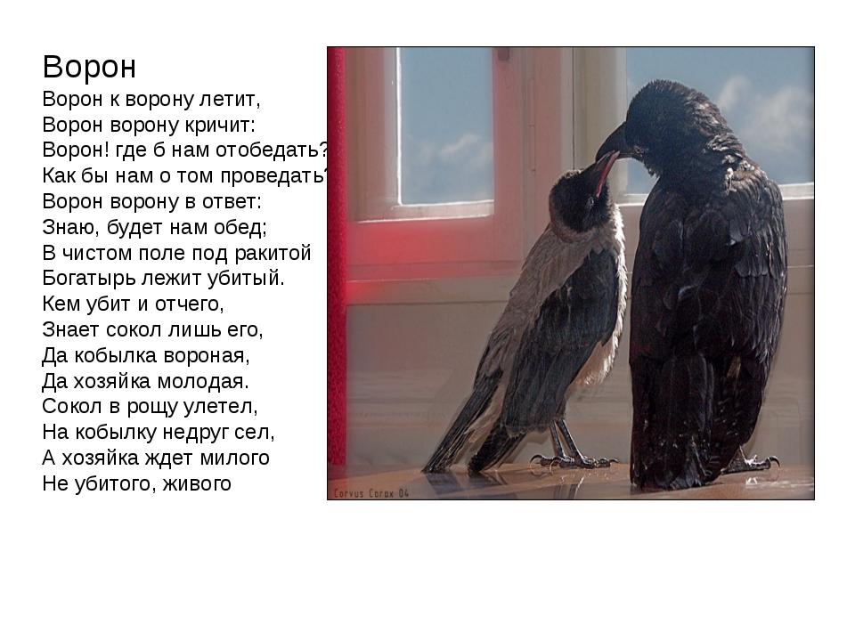 Ворон Ворон к ворону летит, Ворон ворону кричит: Ворон! где б нам отобедать?...