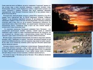 """Самое известное место на Байкале, где растут знаменитые """"ходульные"""" деревья,"""