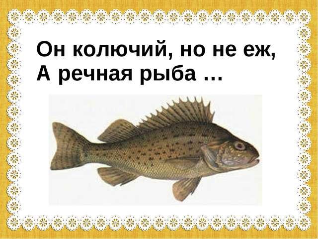 Он колючий, но не еж, А речная рыба …