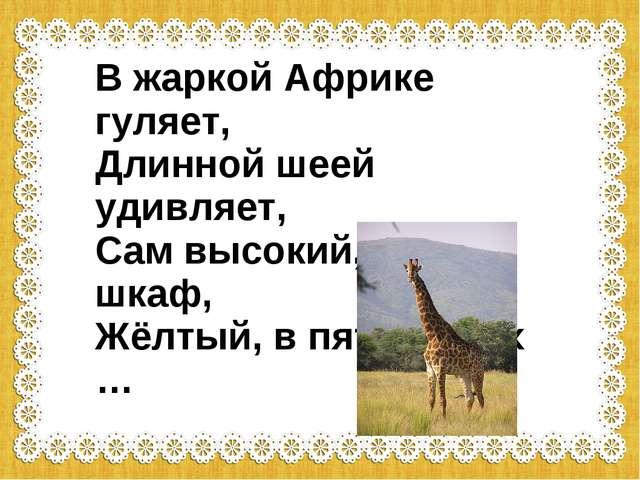 В жаркой Африке гуляет, Длинной шеей удивляет, Сам высокий, будто шкаф, Жёлт...
