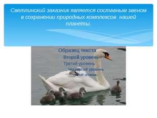 Светлинский заказник является составным звеном в сохранении природных комплек
