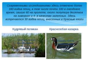 Современными исследованиями здесь отмечено более 180 видов птиц, в том числе