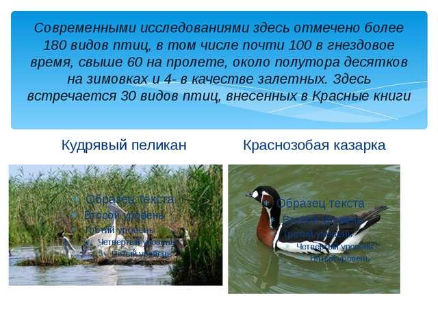 Современными исследованиями здесь отмечено более 180 видов птиц, в том числе...