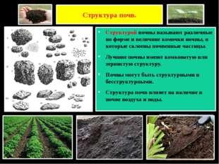 Структура почв. Структурой почвы называют различные по форме и величине комоч