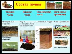 Состав почвы Твердая часть Жидкая часть Газообразная часть Почвенные организ