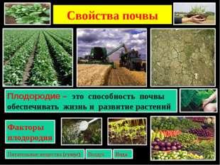 Свойства почвы 2. Зная, от чего зависит плодородие почв, определите где могли