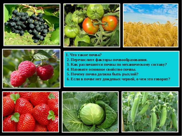 1. Что такое почва? 2. Перечислите факторы почвообразования. 3. Как различают...