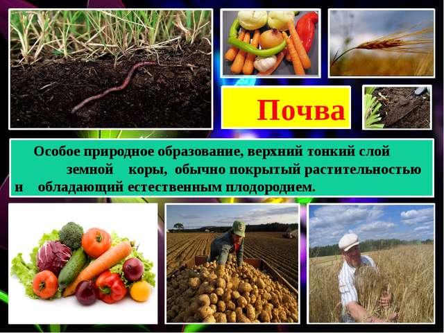 Почва Особое природное образование, верхний тонкий слой земной коры, обычно п...