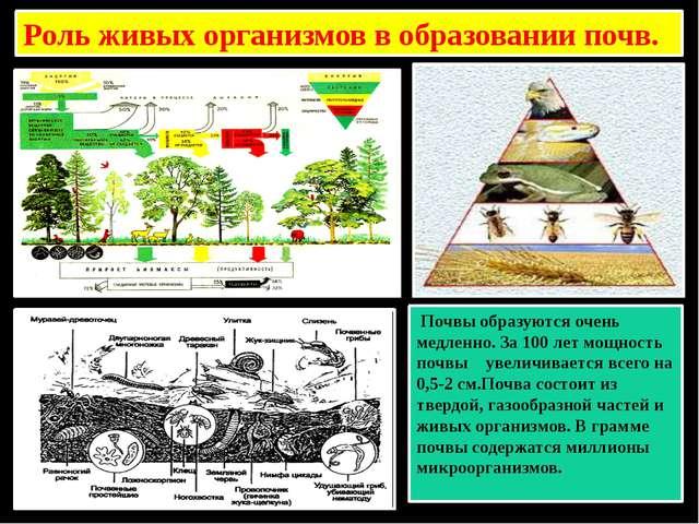 Роль живых организмов в образовании почв. Почвы образуются очень медленно. За...