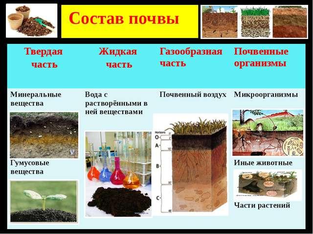Состав почвы Твердая часть Жидкая часть Газообразная часть Почвенные организ...