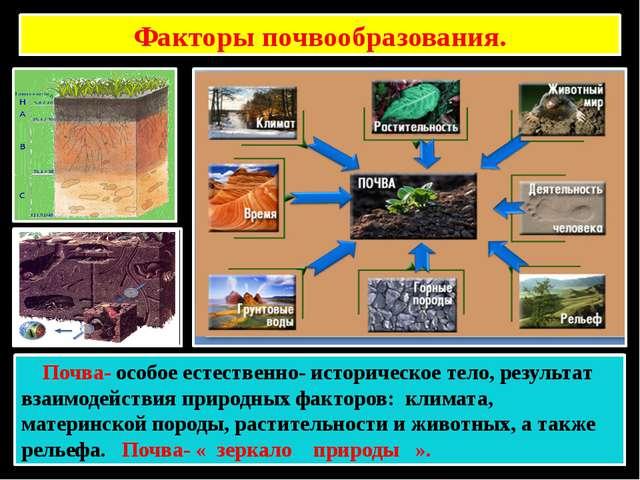 Факторы почвообразования. Почва- особое естественно- историческое тело, резул...