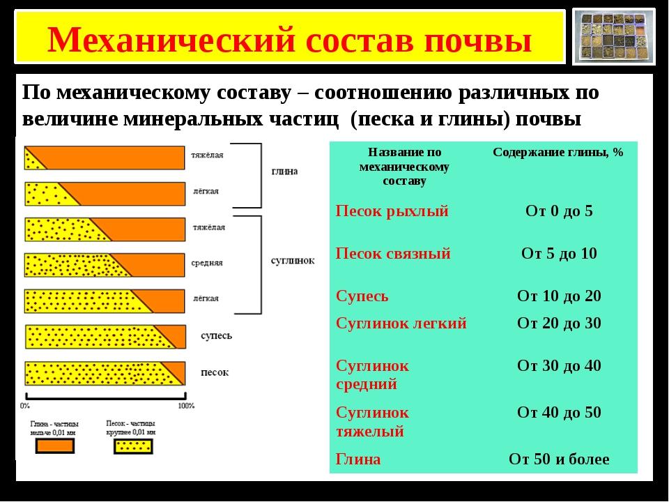 Механический состав почвы По механическому составу – соотношению различных п...