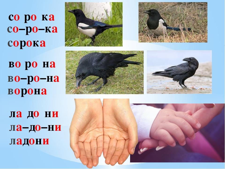 со ро ка со–ро–ка сорока во ро на во–ро–на ворона ла до ни ла–до–ни ладони