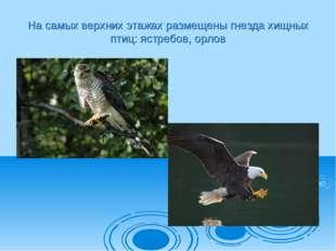 На самых верхних этажах размещены гнезда хищных птиц: ястребов, орлов