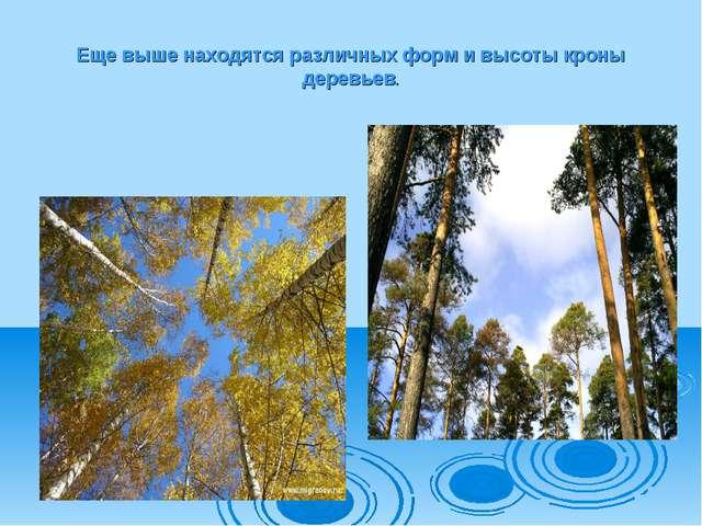 Еще выше находятся различных форм и высоты кроны деревьев.