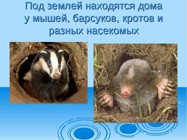 Под землей находятся дома у мышей, барсуков, кротов и разных насекомых