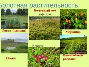 Болотная растительность: Рогоз (камыш) Осока Болотный мох (сфагнум) Морошка В