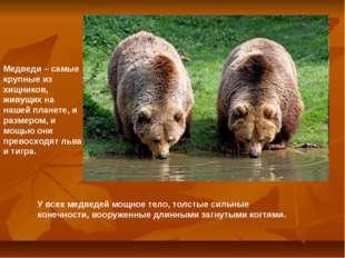 Медведи – самые крупные из хищников, живущих на нашей планете, и размером, и