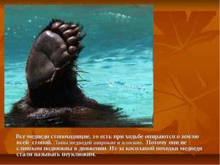 Все медведи стопоходящие, то есть при ходьбе опираются о землю всей стопой.