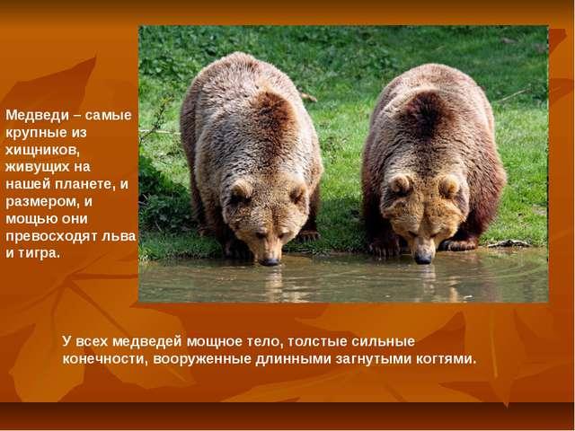 Медведи – самые крупные из хищников, живущих на нашей планете, и размером, и...