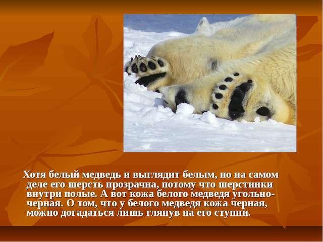 Хотя белый медведь и выглядит белым, но на самом деле его шерсть прозрачна,...