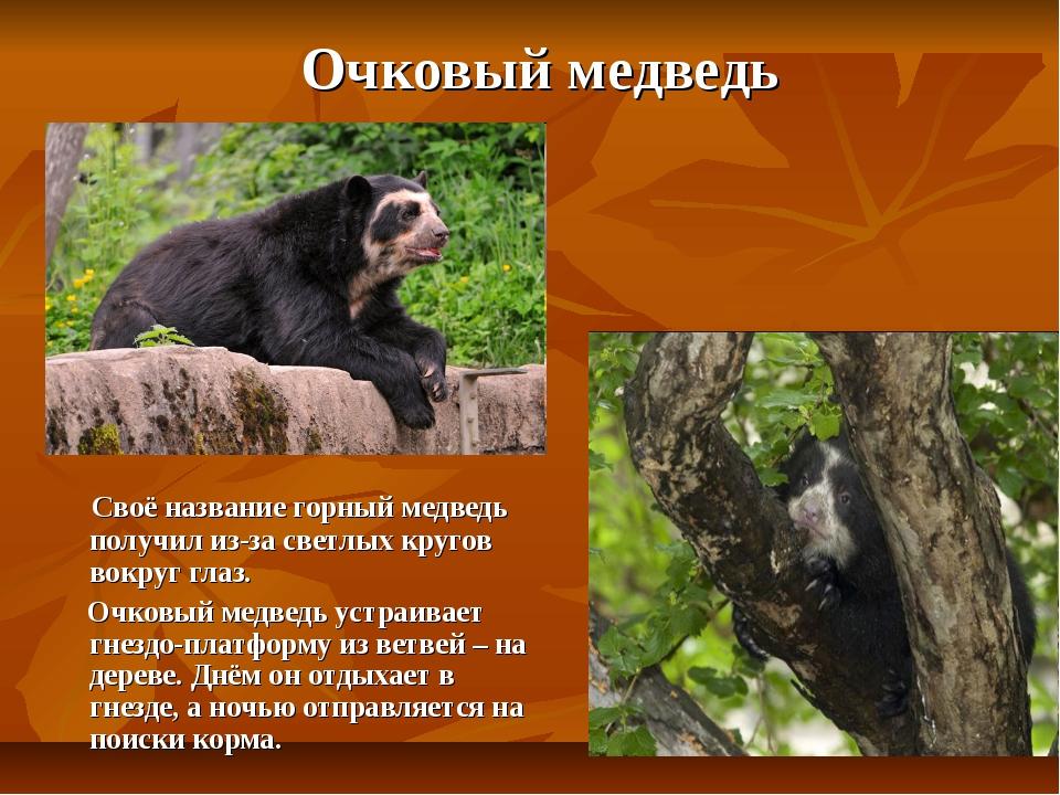 Очковый медведь Своё название горный медведь получил из-за светлых кругов во...