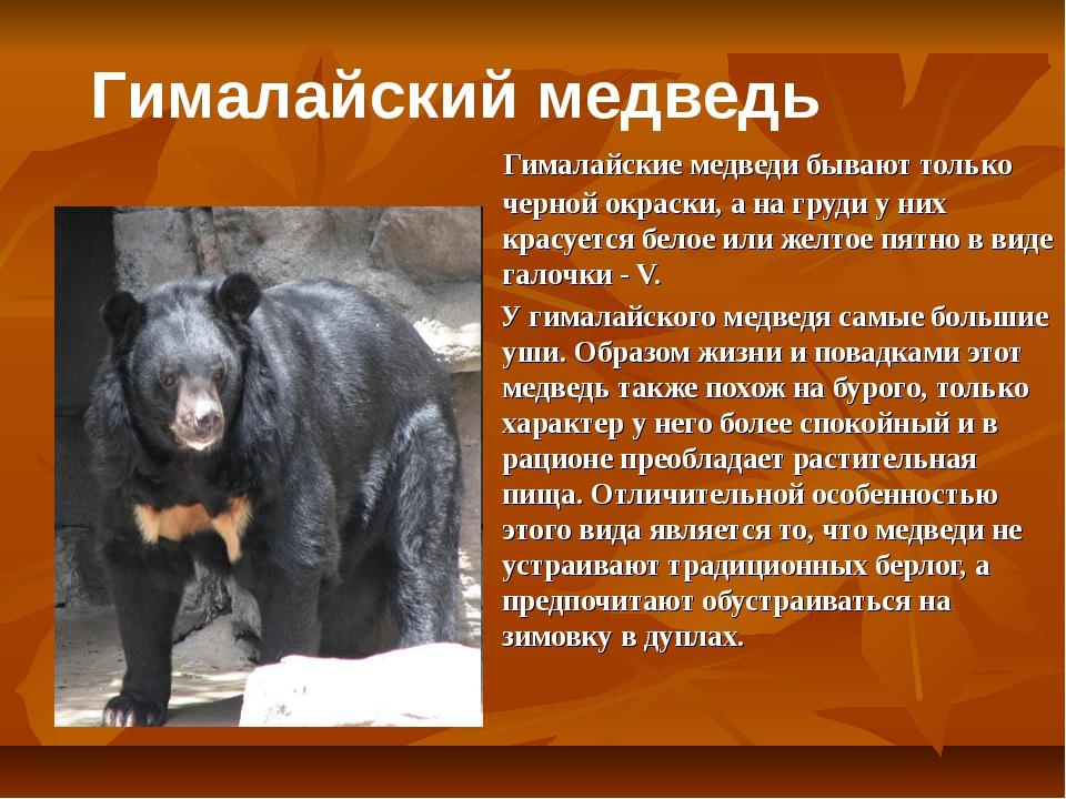 Гималайские медведи бывают только черной окраски, а на груди у них красуется...