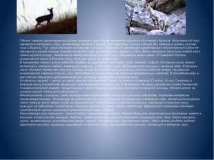 Однако самыми характерными видами животных республики являются исконные обита