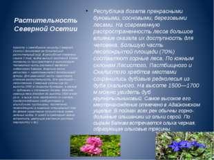 Растительность Северной Осетии Республика богата прекрасными буковыми, соснов
