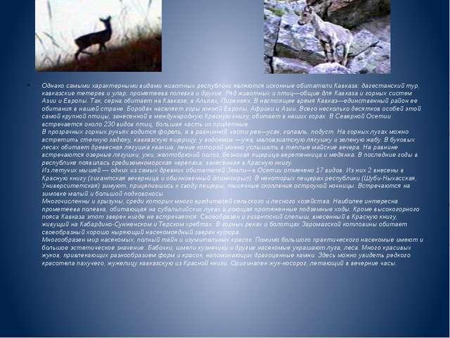 Однако самыми характерными видами животных республики являются исконные обита...