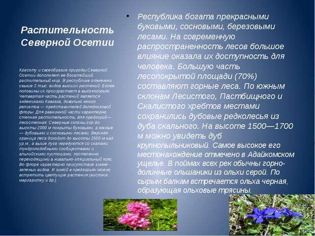 Растительность Северной Осетии Республика богата прекрасными буковыми, соснов...