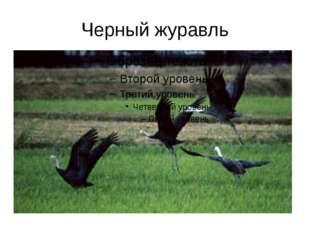 Черный журавль