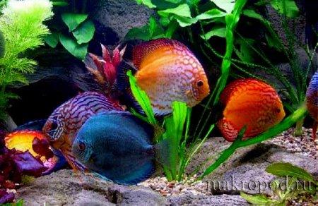 Уход за аквариумными рыбками и уход за аквариумом - 2, Аквариумные рыбки и уход за ними, Рыбы аквариумные, Биофильтр для аквариума