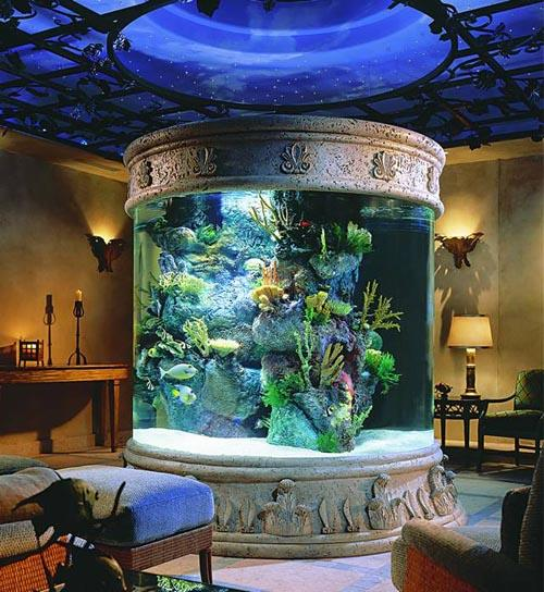 http://www.lifeaquarium.ru/wp-content/uploads/2009/10/dekorativnyi-akvarium.jpg