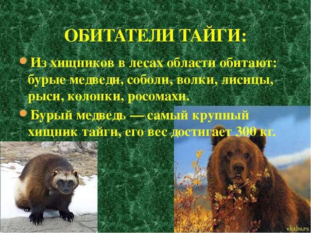 Из хищников в лесах области обитают: бурые медведи, соболи, волки, лисицы, ры...