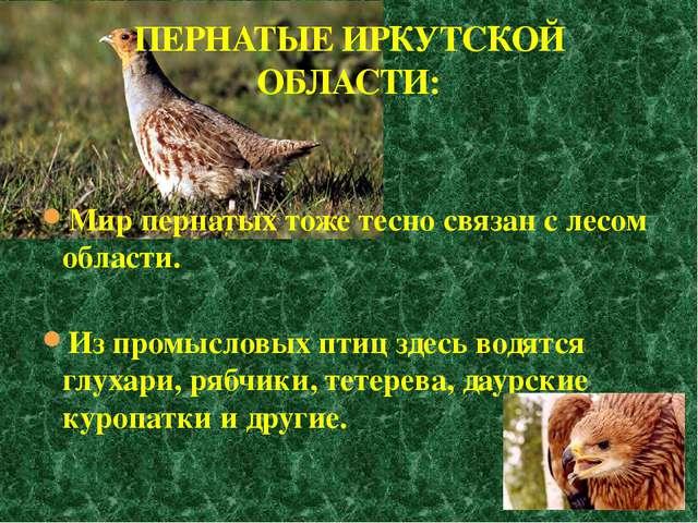 Мир пернатых тоже тесно связан с лесом области. Из промысловых птиц здесь вод...