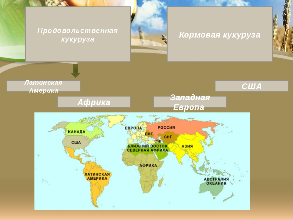 Продовольственная кукуруза Кормовая кукуруза Латинская Америка Африка США Зап...