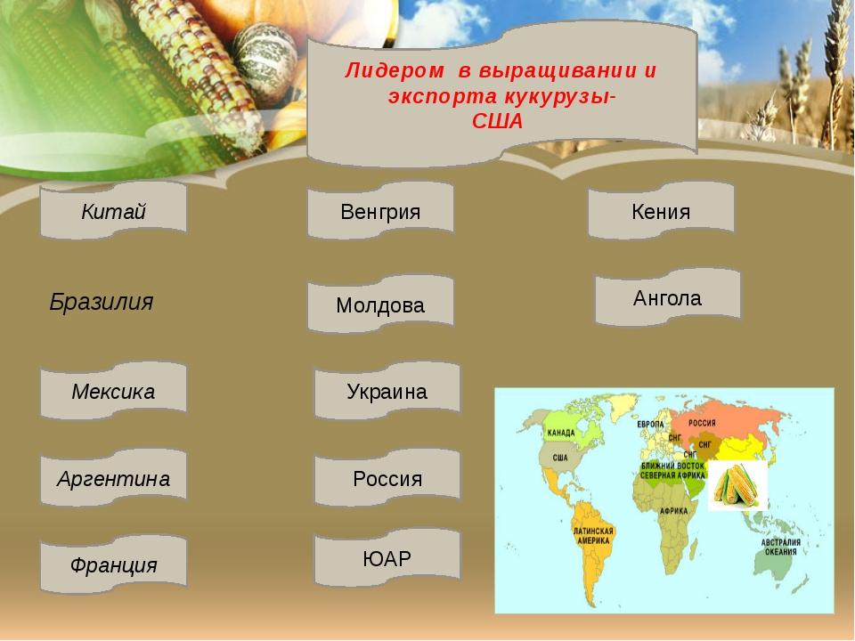 Лидером в выращивании и экспорта кукурузы- США Бразилия Молдова Украина Росс...