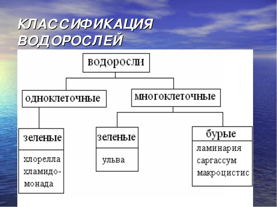 КЛАССИФИКАЦИЯ ВОДОРОСЛЕЙ