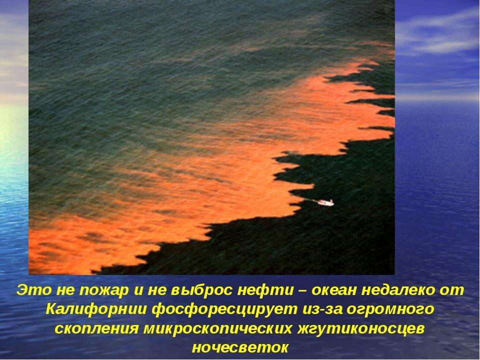 Это не пожар и не выброс нефти – океан недалеко от Калифорнии фосфоресцирует...
