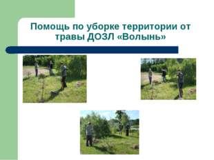 Помощь по уборке территории от травы ДОЗЛ «Волынь»
